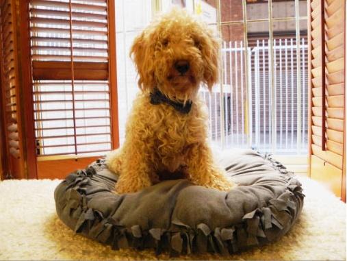 Diy Dog Bed Super Easy No Sew Luigi Me