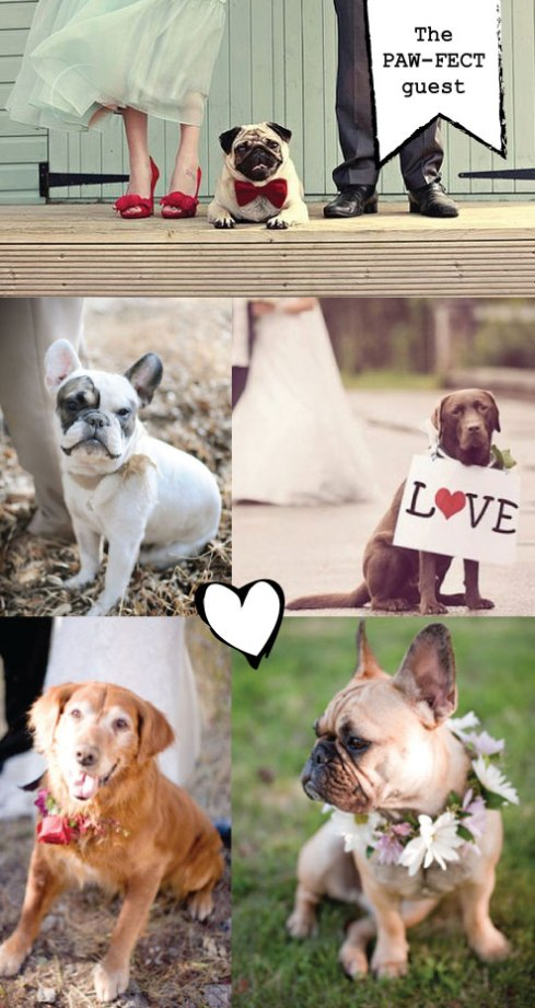 wedding dog collars