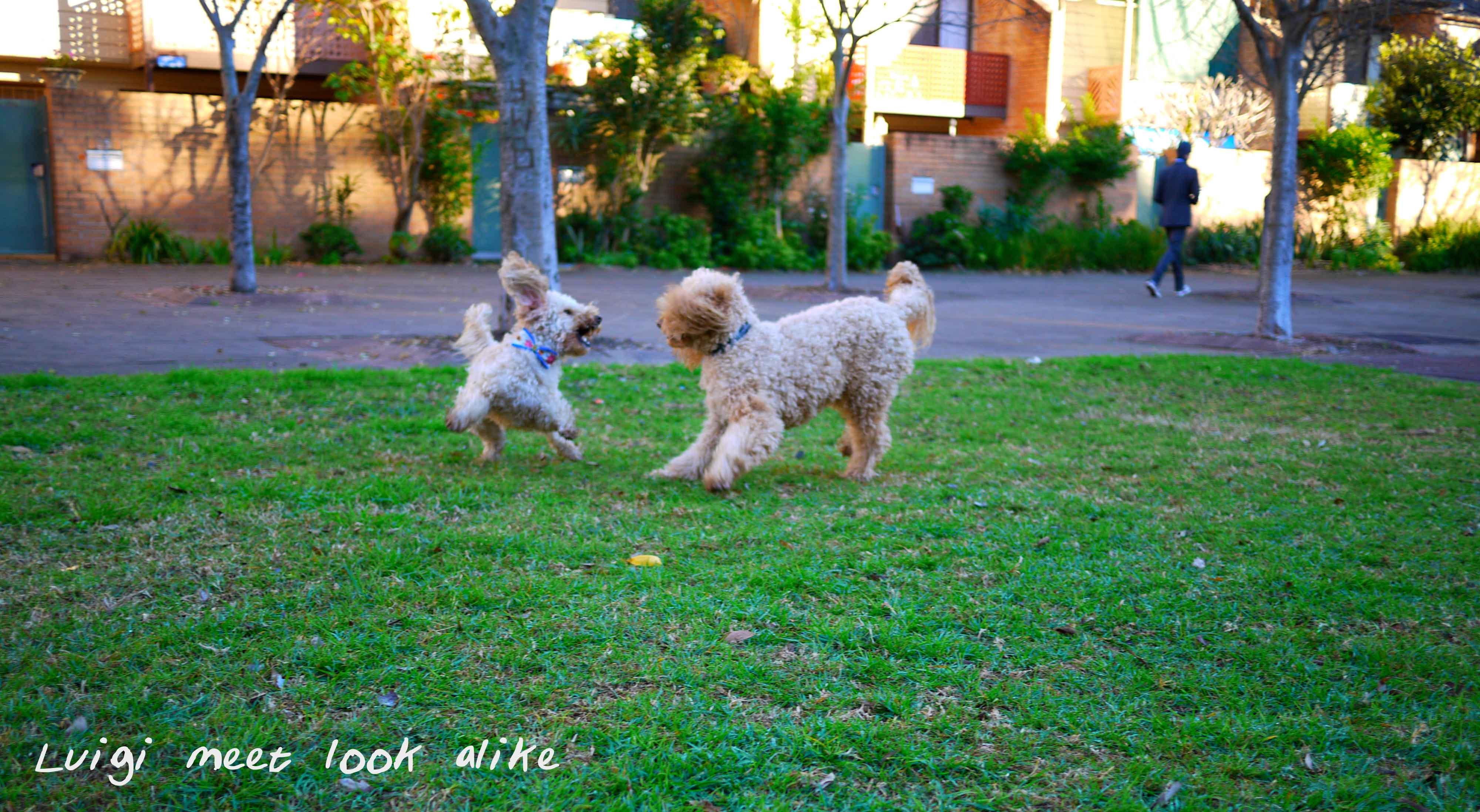 Dog Parks in Woolloomooloo