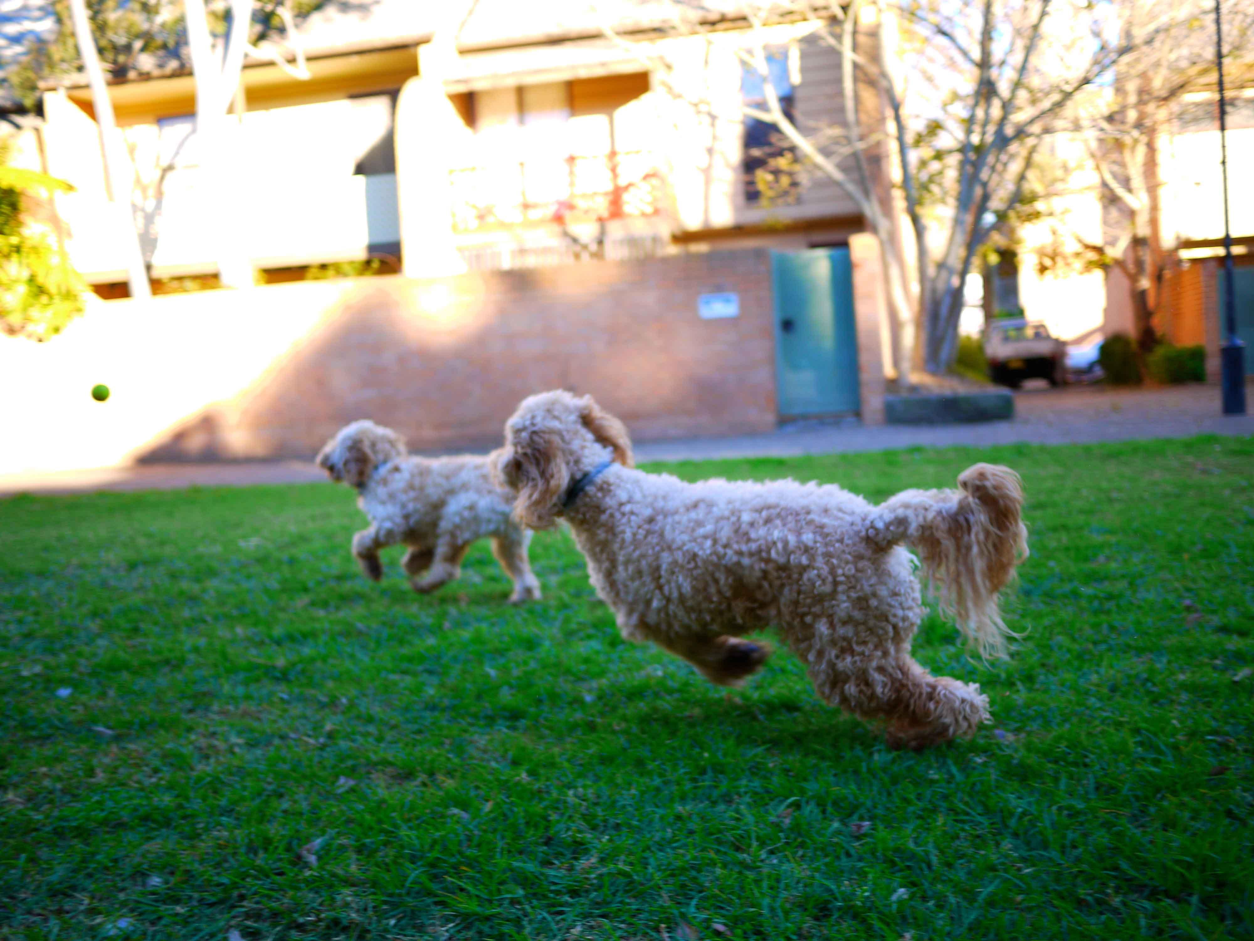Woolloomooloo dog park